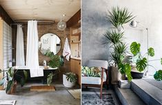 botanical green plants house plants style my home