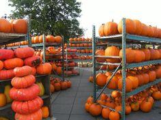 Atwater market - Pumpkins plentiful in the fall season.
