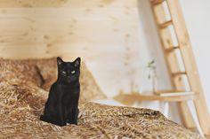 HAYKA - stack of straw bed linen by Dizeno Creative / cat: Zoyka / fot. Kamila Gołębiewska / www.hayka.eu