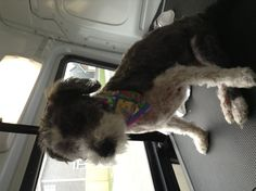 Nikki loves pawdicures out in http://www.aussiepetmobile.ca/locations-map/newfoundland-labrador/