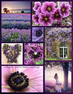 Purples ~ Purple Love, All Things Purple, Shades Of Purple, Purple Flowers, Beautiful Collage, Beautiful Flowers, Mood Colors, Colours, Collages
