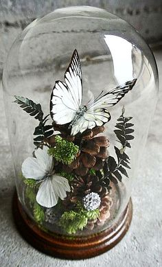 Vintage Taxidermy Butterflies Specimen by ThEeRabbitHole on Etsy Deco Floral, Arte Floral, Cloche Decor, The Bell Jar, Glass Domes, Taxidermy, Diy And Crafts, Projects To Try, Crafty