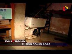 Fusión con plagas: pesadilla sanitaria en pleno Centro Histórico de Lima