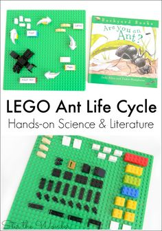 Kids will love learning about the ant life cycle with LEGO bricks!
