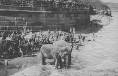 Maharajah Duleep Singh Elephnats on the beach at Whitby Old Pictures, Old Photos, Duleep Singh, Robin Hoods Bay, Nostalgic Images, Northern England, North Yorkshire, Interesting History, The Past