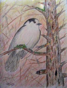 Gray Jay, 8x11 color pencil, 2014