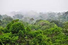 etsi: Αυτό το μποτιλιάρισμα υπάρχει σε ένα βελγικό δάσος...