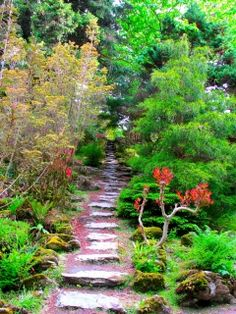 Garden green brightly vegetation trees branches steps