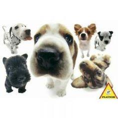 Köpekler, Yoneo Morita (100 parça puzzle) Piatnik 19,50 TL