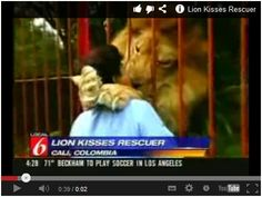 Lion Kisses Rescuer!!! This is AWESOME!!! Watch here:  http://gdurl.tk/Gu