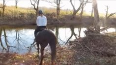 Horse encounters water for the first time