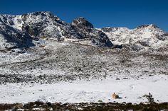 Snow by Manuel Adrega on 500px