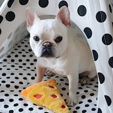 This Frenchie wants you to back away from the pizza slice slowly. www.bullymake.com