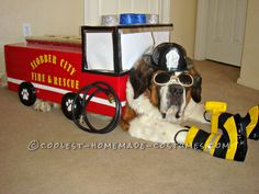 Fire Pawtrol Costume for Snowplow our Dog… Coolest Halloween Costume Contest