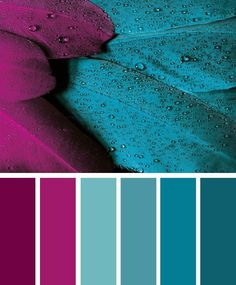 Magenta and teal color inspiration #color #colorpalette