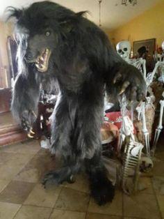 Werewolf prop made from scratch-Halloween forum member Roxie
