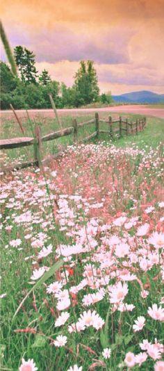 ᗰᕮᗩᗪƠᗯ of Wildflowers. LOVERLY SUMMER TIME WILDFLOWERS...RAINEY...