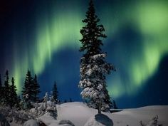 The northern lights turn the night sky an otherworldly green above Wapusk National Park in Manitoba, Canada.
