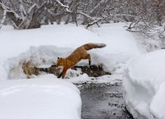 Winter landing. by Igor Shpilenok on 500px