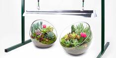 Grow Light Basics: Artificial Lighting For Succulents U0026 Cacti Home Design Ideas