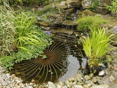 Small Garden Pond with Rustic Wheel Feature and Waterfall, Norfolk, UK - lovely safety feature.