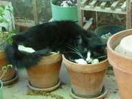 Cat Would Not Fit in One Flowerpot