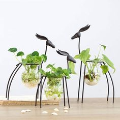 Buy a Hydroponics Glass Vase with Wood Stand for your home or office.Find flower vases at the Apollo Box. Indoor Garden, Garden Art, Flower Vases, Flower Pots, Apollo Box, Vase Crafts, Diy Crafts, Plant Shelves, Floral Wall