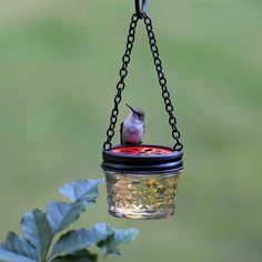 "DIY hummingbird mason jelly jar feeder. Link doesn't give instructions, but I've seen people asking how they put the holes in the lid. They sell lids with holes labeled ""For use with drinking straws"" or for crafts. Cute idea! ☺"
