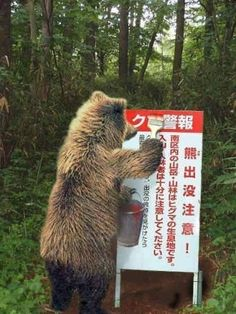 "The sign says ""Beware of bears! We Are All One, Mother Teresa, Illustrations And Posters, Animal Rights, Brown Bear, Funny Images, Funny Animals, Creatures, Humor"