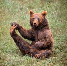 I'm having issues with this yoga thing Large Animals, Animals And Pets, Baby Animals, Funny Animals, Cute Animals, Wild Animals, Baby Panda Bears, Baby Pandas, Yoga Drawing