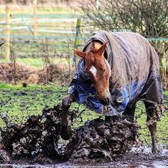 WOW 😱😨😫Now that is a mud monster🐴PC: @chris35ryan📷#Regram