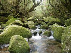 屋久島にある縄文杉などの絶対行きたい観光スポット41選。世界遺産の島で神秘の森を満喫! - Find Travel