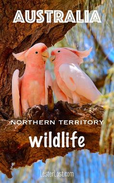 Travel Australia | Northern Territory | Australian Bush | Australian Wildlife | Birds of Australia | Uluru | Ayers Rock | Kings Canyon | Road Trip | Adventure Travel