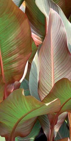Ein Blick in tropische #pflanzen beruhigt, falls so manches Fußballspiel zu spannend ist ;)
