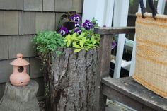 naturally hollowed out log turned into a planter