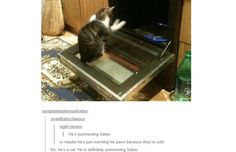 35 Hilarious Tumblr Posts That All Cat Owners Know To Be True (Slide #4) - Pawsome