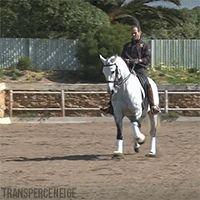 Transperceneige — Pedro Torres & AHOTO, lusitano stallion, Champion...