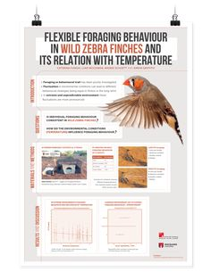 Design scientific research posters.