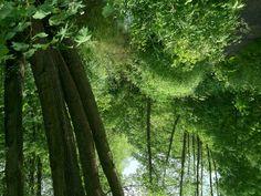 Dschungel.