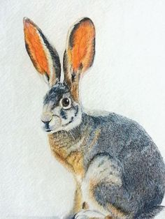 Image result for hares in art
