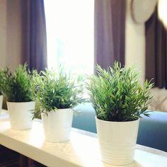 #studiometro Planter Pots, Studio, Study