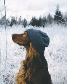 Most of us will agree - dogs are awesome. And that's exactly what Troja, an Irish Setter with a passion for treats and adventures, is. Cute Puppies, Cute Dogs, Dogs And Puppies, Doggies, Animals And Pets, Funny Animals, Cute Animals, Hipster Dog, Dog Tumblr
