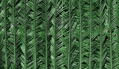 Realistic Graphic DOWNLOAD (.ai, .psd) :: http://jquery.re/pinterest-itmid-1006556097i.html ... Palm leaf background ...  asia, background, exotic, fern, green, growth, leaf, palm, pattern, plant, sky, stem, summer, thailand, tree, tropical, wildlife  ... Realistic Photo Graphic Print Obejct Business Web Elements Illustration Design Templates ... DOWNLOAD :: http://jquery.re/pinterest-itmid-1006556097i.html