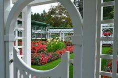 Jennie's Private Garden. #summer #butchartgardens #explorevictoria Rose Varieties, Private Garden, Fence, Yard, Exterior, Outdoor Structures, Windows, Explore, Summer