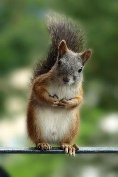 The News For Squirrels: Canuck Anti-Squirrel Propaganda