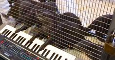 Watch Out Mozart - These Otters Are Putting On A Show! - Cute Videos