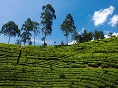 Sri Lanka wordt een steeds populairdere reisbestemming. We geven praktische info, noemen alle hoogtepunten en budgettips voor backpacken in Sri lanka.