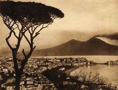 Gli Alberi monumentali sono una cartolina per l'Italia In questa foto, quello che a lungo è stato forse l'albero più famoso d'Italia, il pino marittimo che dalla collina di Posillipo si affacciava sul Golfo di Napoli (la foto è del primo Novecento, duran #italia #alberi