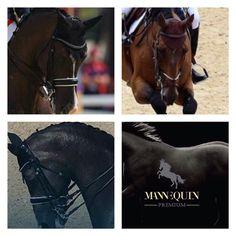 ... gold medal winners 2016 ... #gold #medal #rio2016 #horses #horsesofinstagram…