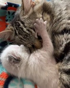 Any cats and kitten that are cute. See more ideas about Cute cats, Cute kittens Tags: Cute Baby Cats, Cute Little Animals, Cute Cats And Kittens, Cute Funny Animals, Kittens Cutest, Funny Cats, Kitty Cats, Kittens Meowing, Cats Humor